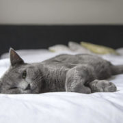 起きれない猫